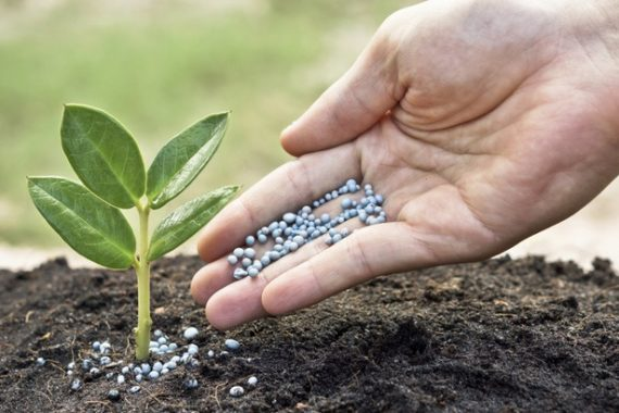 Granular-fertilizer-is-commonly-used-as-a-spreader-product